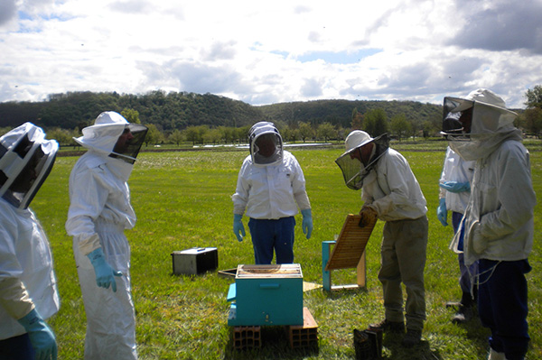 Formation en apiculture au Centre de détention de MAUZAC
