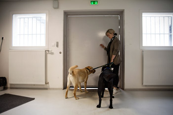 Les chiens rentrent en détention : crédit photo: FondationdeFrance/T.Salva